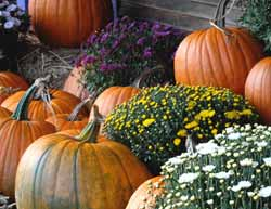 Pumpkins Herald Fall